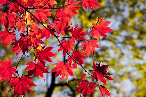 autumn-leaves-2789234__340.jpg